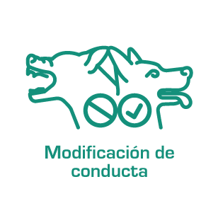 ModificacionConducta2020
