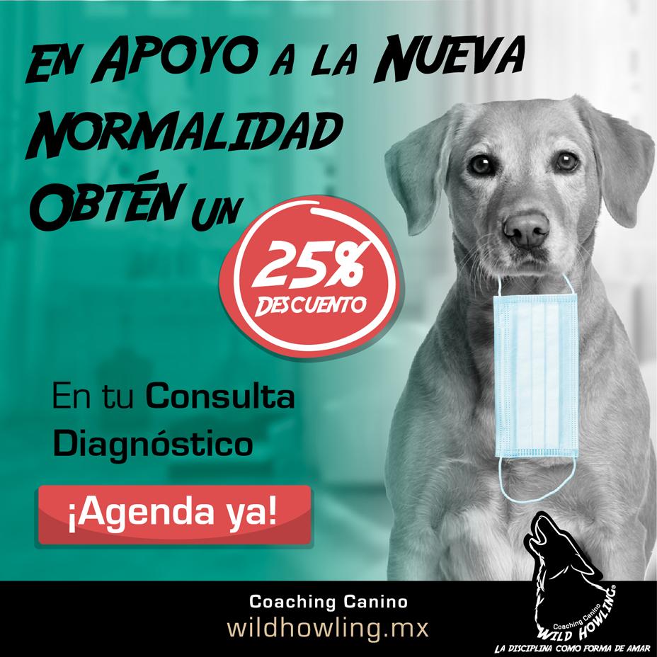 Wild Howling® Coaching Canino La Disciplina como forma de amar